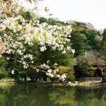 春の白水阿弥陀堂